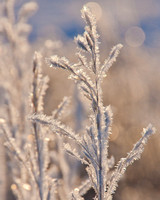 Frost & Feathers Feb 6, 2012