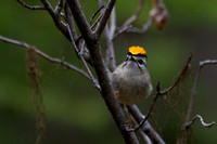 Local Birds May 7-11, 2014