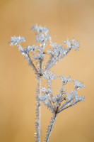 frost covered wild flowers and foliage