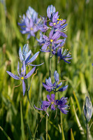 Camas 2 - Packer Meadow - '12
