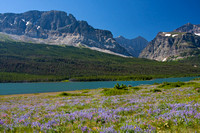 Wildflowers and mountains of the Many Glacier region of Glacier National Park