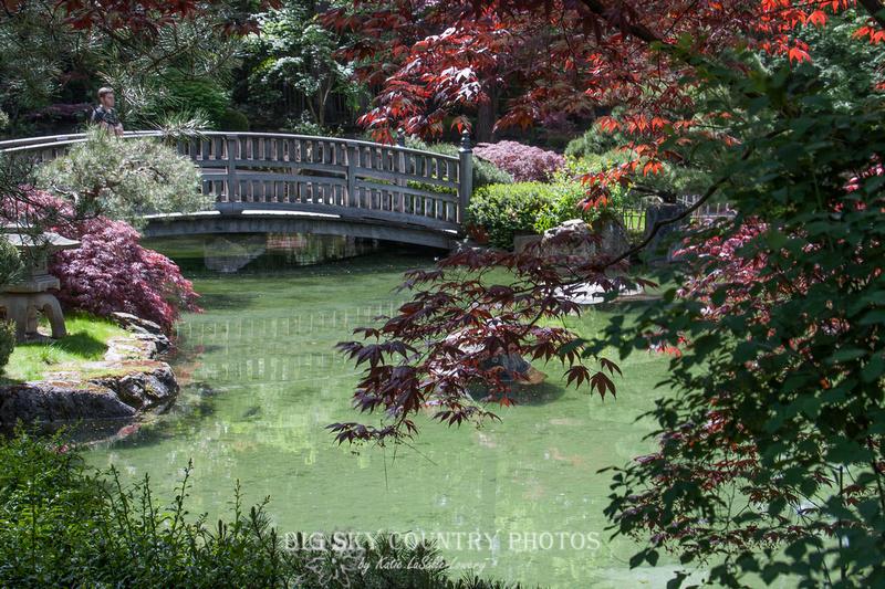 Big sky country nishinomiya tsutakawa japanese garden for Nishinomiya tsutakawa japanese garden koi