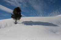 A tree and its long shadow on a snow covered slope