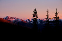 mountain peaks and alpine fir trees in the pink glow of evening twilight