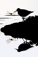 silhouette of solitary sandpiper with dragonfly on lake shore