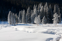 Sunlight shines like a spotlight on hoar frosted trees along Yellowstone's Soda Butte Creek at Round Prairie