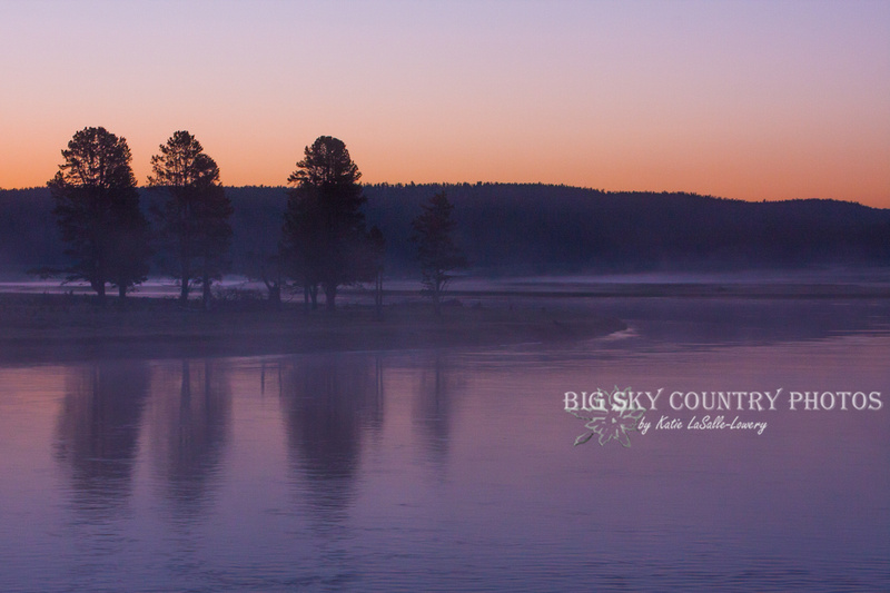 A dreamy misty foggy morning in the predawn pink glow of the minutes before sunrise along the Yellowstone River as it makes its way through the Hayden Valley